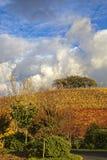 Förbluffa blå himmel och vita moln över en vneyard royaltyfri fotografi