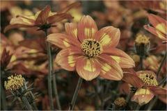 Förbluffa blommor 2 Royaltyfri Foto
