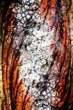 Förbluffa den färgrika snubblade tapeten för bakgrund för trädfrunchabstrakt begrepp fotografering för bildbyråer