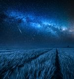 Förbluffa den mjölkaktiga vägen över fält med vete på natten royaltyfria bilder