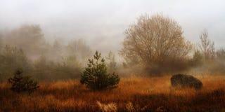 Förbluffa det December landskapet Royaltyfria Foton