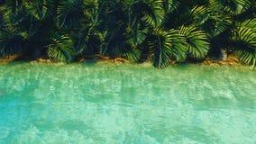 Förbluffa det fantastiska dammet i djungeln klar dag Gröna palmträd, klart vatten, kryp och fjärilar h?rligt lager videofilmer