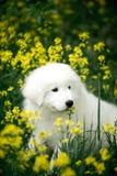 Förbluffa gullig morema för ståendehundvalp på gräs i blommor royaltyfri fotografi