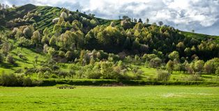Förbluffa panorama- landskap med grönt gräs, kullar och träd, molnig himmel fotografering för bildbyråer