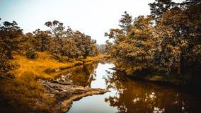 Förbluffa reflexion i floden i skog arkivbilder