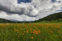 Förbluffa sikter av den blommiga ängen Royaltyfri Fotografi