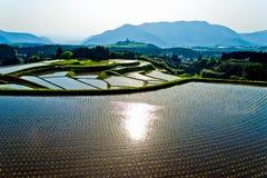 Förbluffa terrasserad rice sätter in i Japan Kyushu Fotografering för Bildbyråer