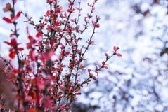 Förbluffa vintersäsong på den Yading naturreserven i Sichuan, Kina arkivfoto