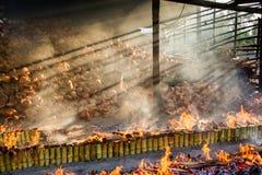 Förbränningväxten bränner ris grillade i bambu soa för klibbiga ris Arkivbild