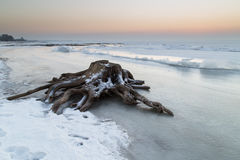 Förbrylla på kusten av en djupfryst sjö Royaltyfri Foto