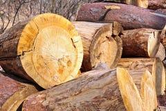 förbryllar trä Arkivbilder