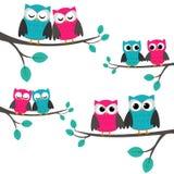 förbunde owls Royaltyfri Fotografi