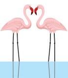 förbunden flamingoen Fotografering för Bildbyråer