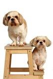 förbunden hunden royaltyfria bilder
