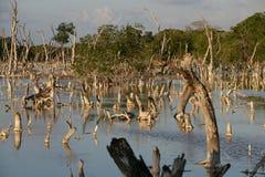 fördärvad skog Arkivfoto