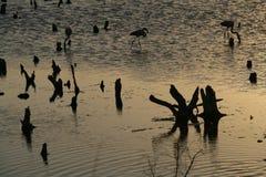 fördärvad skog Royaltyfri Foto