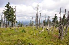 fördärvad skog Arkivbilder