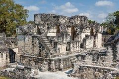 Fördärvar av den forntida Mayan staden av Tikal Arkivbilder