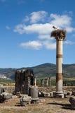 Fördärvar av den forntida staden av Volubilis morocco Fotografering för Bildbyråer