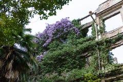 Fördärvar av en byggnad som täckas med blomningväxter Arkivfoto