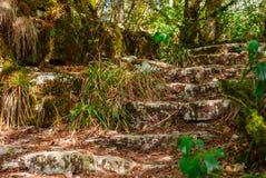 Fördärvar av en forntida trappuppgång i djungeln royaltyfri bild
