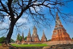 fördärvar den historiska parken för ayutthayaen tempelet Arkivbilder