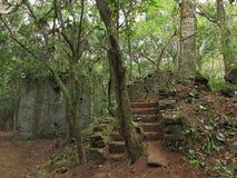 Fördärvar i mitt av skogen Royaltyfri Foto