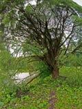 fördelande tree royaltyfri fotografi