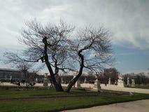 fördelande tree blå sky grön lawn paris fjäder royaltyfri foto