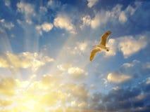 Fördelande vingar för Seagull i strålar för inställningssol Arkivfoto