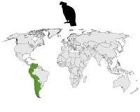 fördelning för andean condor Arkivbilder