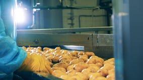 Förderband mit den Kartoffeln, die Schnitt in Hälften kommen stock video