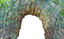 Fördjupning i ett träd som isoleras på en vit bakgrund royaltyfri bild