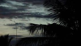 Fördunkla filialen och sidor för kokospalm för tidschackningsperiod 4K lager videofilmer