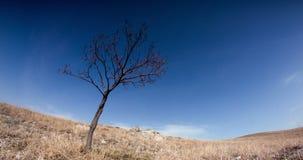 Fördunkla flugan över det skälvande trädet och gulna gräs