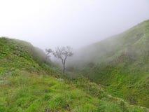 Fördunkla i den gröna dalen, ett träd i misten, den Indonesien monteringen Rinjani Royaltyfria Foton