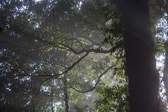 Dimma i skogen Royaltyfria Foton