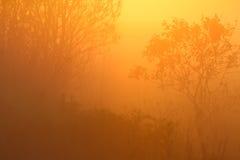 Fördunkla på gryning i den forestDramatic bakgrunden av naturen Arkivbild