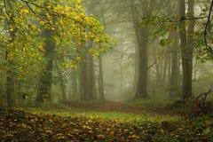 fördunkla skogen Arkivfoto
