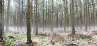 fördunkla skogen Royaltyfria Bilder