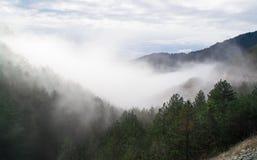 fördunkla skogen Arkivbild
