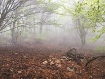 fördunkla skogen Arkivbilder