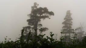 fördunkla skogen royaltyfri fotografi