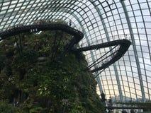 Fördunkla skogen i trädgård vid fjärden i den Singapore gränsmärket Arkivbild