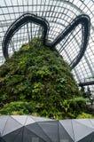 Fördunkla skogkupolen på trädgården vid fjärden Royaltyfria Foton