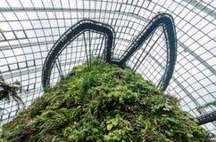 Fördunkla skogkupolen på trädgården vid fjärden Arkivfoton