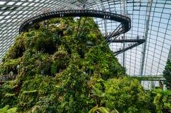 Fördunkla skogkupolen på trädgården vid fjärden Arkivbild
