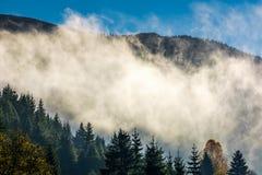 Fördunkla stigning upp från skogen i höstmorgon royaltyfria foton