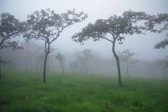 fördunkla treen Royaltyfria Bilder