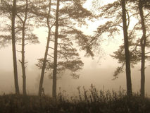 fördunkla trees Royaltyfri Foto